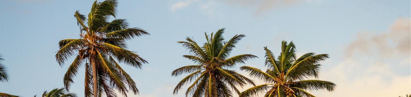 View of Palm Trees